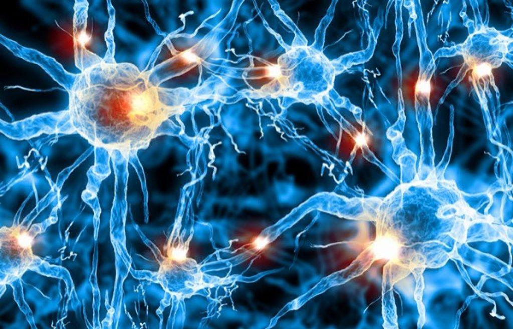 активность клеток